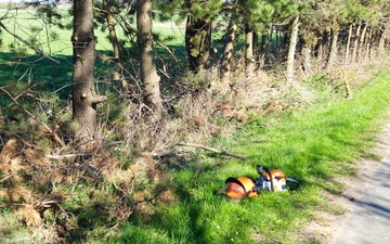 Mortensen's haveservice med Skovning/beskæring ved Hjørring