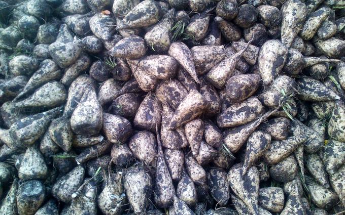 Øllingsøe gods med Roeoptager ved Søllested