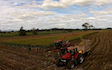 Grain & food limited with Forage harvester at Gordonton