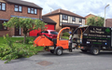 L neal tree surgery  with Wood chipper at Parkdale