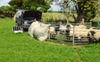 Rw livestock  with Livestock contracting at Homefield Avenue