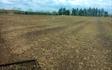 Iwersen agro med Rækkekultivator ved Tinglev