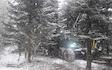 Jc skovservice med Skovning/beskæring ved Vejen