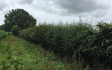 Heath hedging with Hedge cutter at Horsham