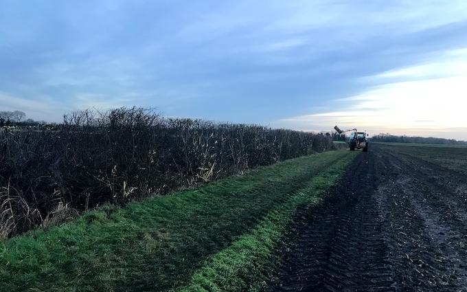Sizeland pigs ltd with Hedge cutter at Lakenheath