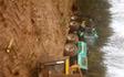 Gepi skovservice  med Skovning/beskæring ved Karup