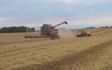 Thorsmark agro a/s med Mejetærskning ved Randers
