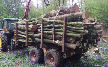 Oliver berti forestry and firewood  with Forwarder at Park Gate