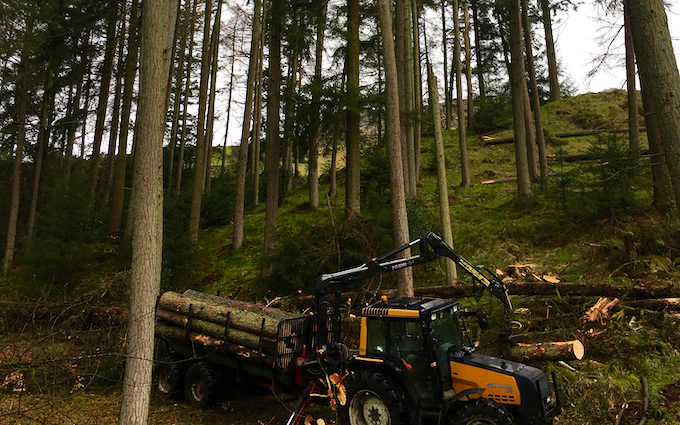 Askew forestry with Chain saw at Lawkland