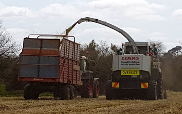 Southridge contracting with Forage harvester at Te Ohaki
