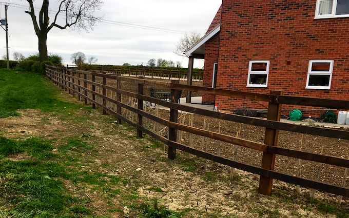 Robert duffin hedge laying fencing groundwork  with Fencing at Saxby