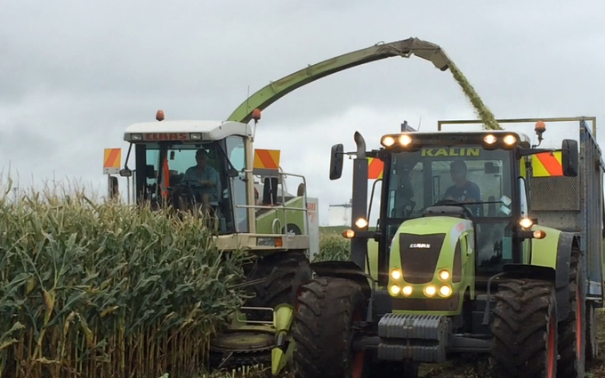 Kalin contracting ltd with Forage harvester at Manaia