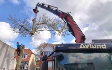 Avlund skov & træpleje med Rodfræser/Stubfræser ved København