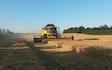 Hjortlund landbrug & maskinstation med Mejetærskning ved Grindsted