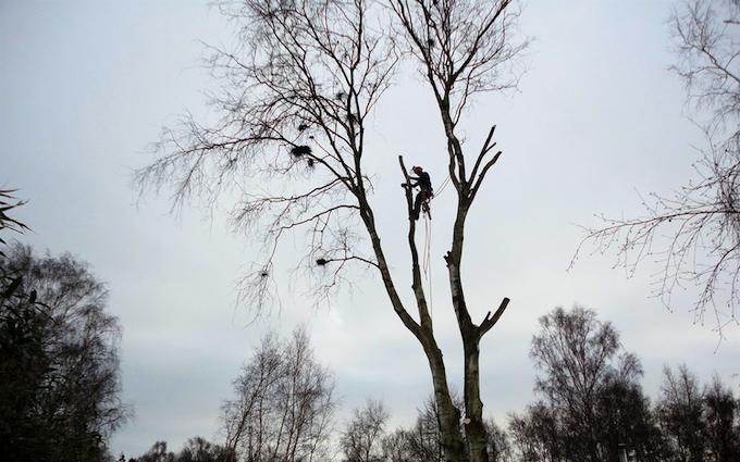 Lillevang med Skovning/beskæring ved Vejle