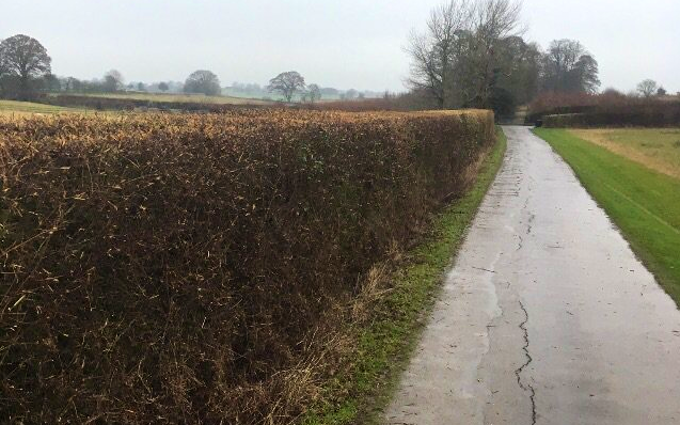 Alex tinson with Hedge cutter at Malmesbury Road