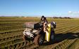 Stauning agro med Jordprøvetagning ved Skjern