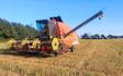 Aakerhjelms landbrugs services med Mejetærskning ved Hejnsvig