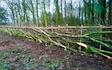 Midlands rural contracting with Hedge cutter at Astley Cross