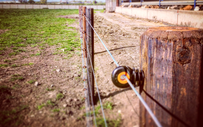 Sam watson fencing  with Fencing at Kirkby Malzeard