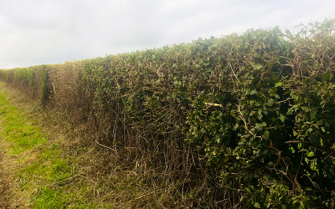 Rjs agri contractors limited with Hedge cutter at Waterlooville
