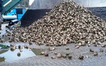 Søren peter sørensen  med Roelæsser ved Suldrup