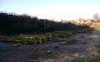 Grenknuserens skovservice med Skovning/beskæring ved Hobro