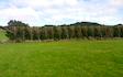 Tararua hedge cutting ltd. with Hedge cutter/mulcher at Mangatainoka