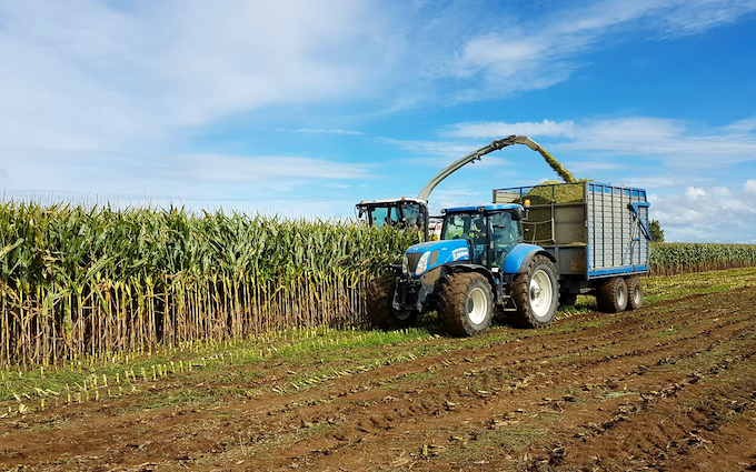 Jackson contracting  with Forage harvester at Tauhei