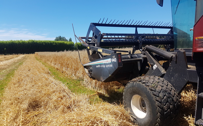 Maugers rural contracting  with Windrower at Rolleston