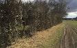 Holebæk landbrug med Hegnsklipper ved Asperup