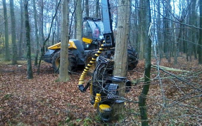 Skovbryn i/s med Skovning/beskæring ved Jyderup